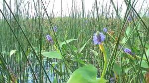 photo documentary coastal wetlands great lakes video capture