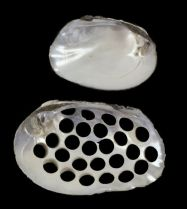 photo freshwater mussel buttons nsf illinois