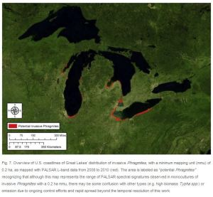 phragmites map great lakes red