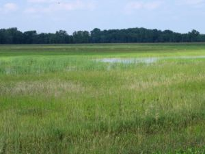 shiawassee refuge 180 acres