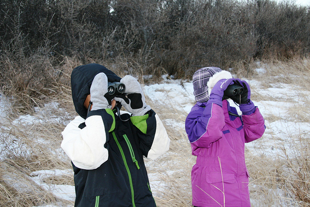 christmas bird count winter snow audubon
