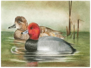 duck-stamp-michigan