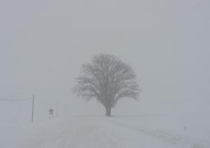 michigan tree snow wind
