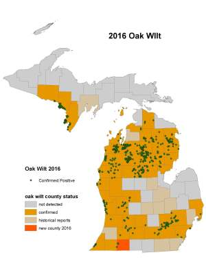 oak-wilt-michigan-2016