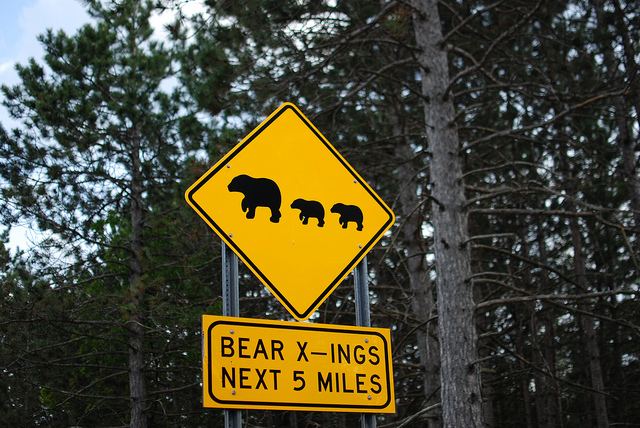 black bear michigan crossing