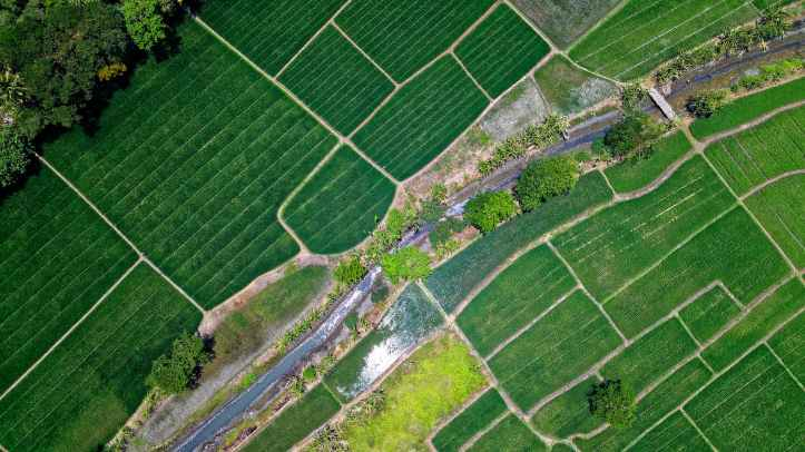 bird s eye view of river in middle of green fields
