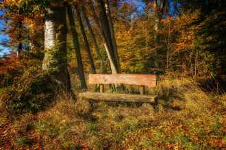autumn bench color countryside