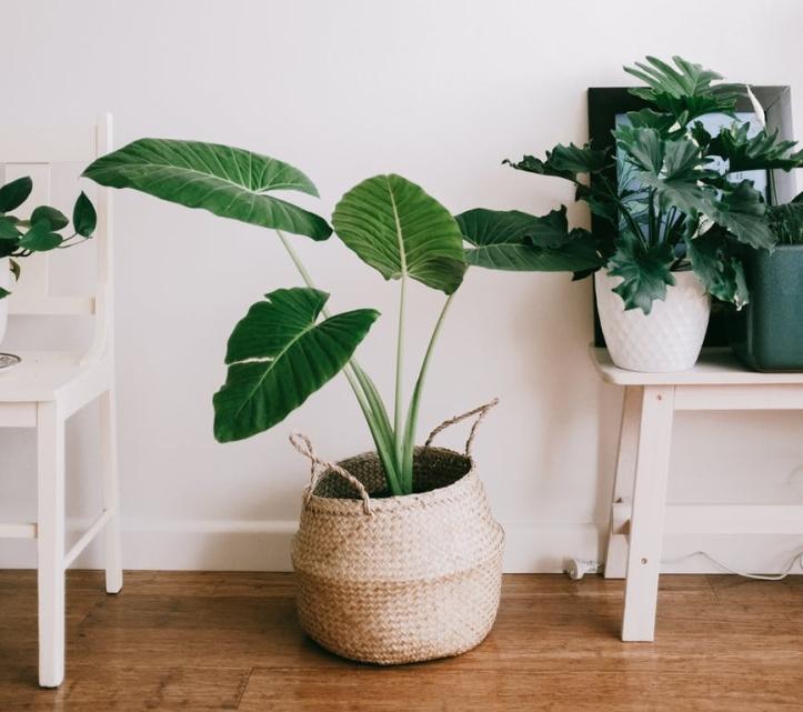 house plants healing